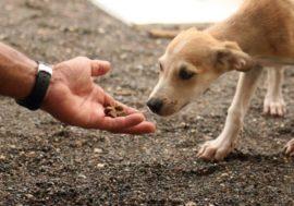 В Казахстане стартовала подписная кампания в пользу закона о защите животных