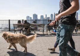 Из приютов Нью-Йорка забрали всех животных: так жители решили скрасить одиночество во время карантина