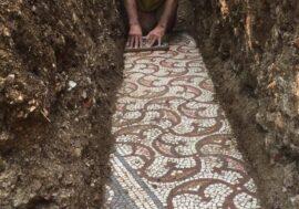 Под виноградником в Италии найдена древнеримская мозаика