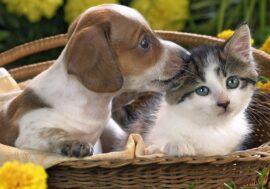 Митинг в поддержку принятия закона об ответственном обращении с животными пройдет в Алматы