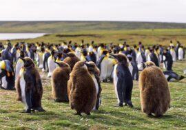 Климатический кризис пошел на пользу пингвинам