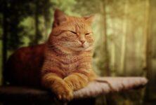 В Казахстане найден скелет древнейшей домашней кошки на Шелковом пути