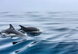 В Крыму впервые появится реанимобиль для дельфинов