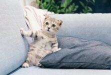 Появился переводчик с кошачьего языка