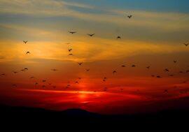 Исследование: чем больше видов птиц вокруг — тем счастливей человек