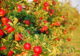 В Алматинской области появится сад на 1000 Га и цех по переработке фруктов