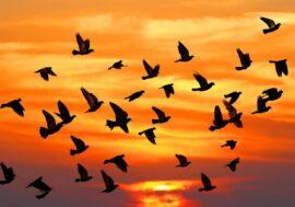 JCPA: Обнаружено письмо Альберта Эйнштейна о птицах и физике