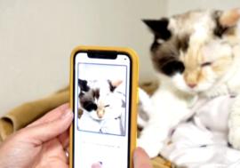 Канадская компания  запустила  сервис  для оценки  самочувствия  котов