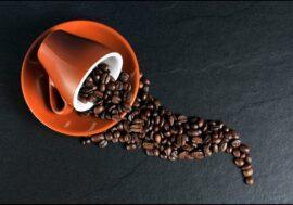 Финские ученые вырастили кофе в пробирке