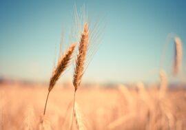 В Северном Казахстане предложили создать фуражный фонд